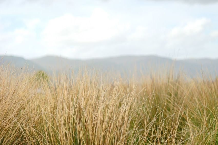 Nowhere Field Landscape Mountain Nothingness Reeds Rural Scene Solitude Tranquil Scene Tranquility