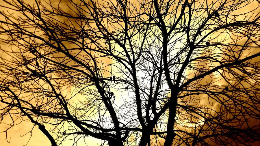 Birds in a barren tree Birds Golden White Rust Dark Gold Barren Tree Branches Singing Birds Singing Distance Depth Zen Inspiration Elegant Copy Space Rewilding Dramatic Sky Branch Tree Low Angle View Silhouette Nature Beauty In Nature Bare Tree
