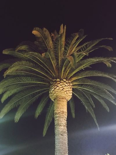 Tree Night Palm Tree Outdoors Beauty In Nature