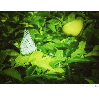 【 殘影 】 虛幻真實的影子 唯自己能如破繭般的突破 是你,自己。 G4 Butterfly 365Snap Shadow