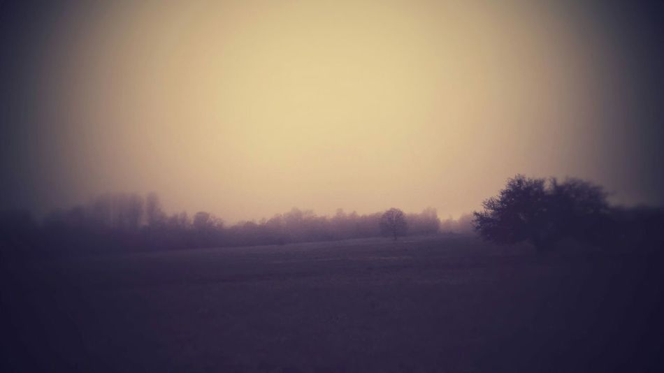 Notes From The Underground Nature Spring Time Long Walks Enjoying Life Foggy Weather Woods No Words....