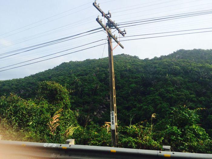 Tree Power Line