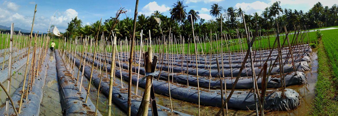 Indonesian farmer acivity Hello World