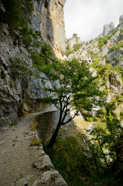 Ancient Civilization Arid Climate Canyon Cliff Day Eroded Geology Moss Nature Physical Geography Rock Rock - Object Rock Formation Rocky Rocky Mountains Rough Stone Picos De Europa Rutadelcares