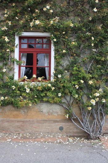 Flowering plants growing on house