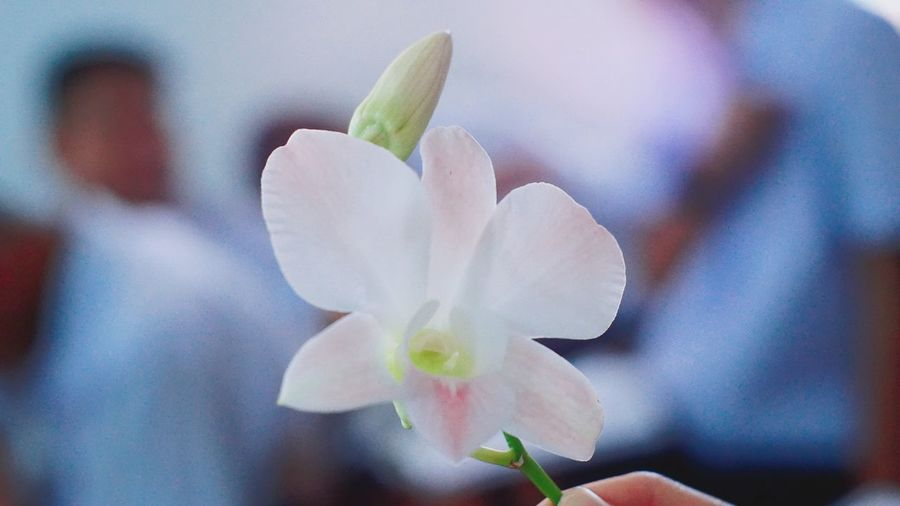 clearly Beauty In Nature Day Flower Nature Orchid Flower Orchids Plant White