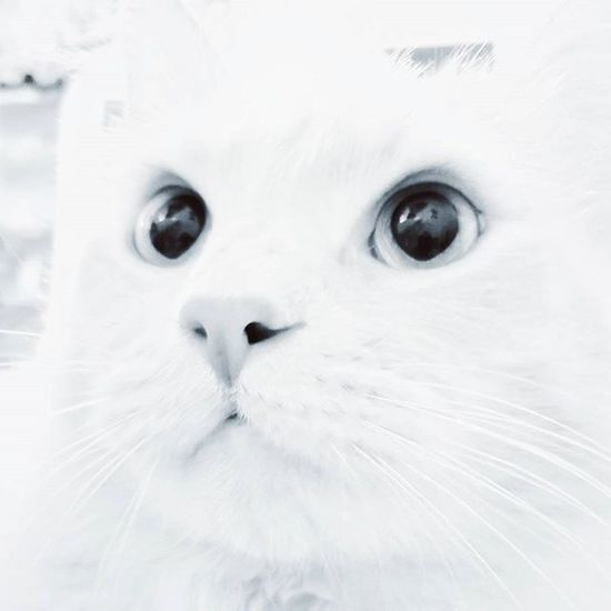 C U T E C A T 🐱 LG  Igersfrance Igersmarseille Igerstoulon Toulon LaGarde Cute Cat Lovely Blachandwhite Ig_blacknwhite Bnw_life Bnw_society Bnw_captures Bnw_france Catsofinstagram Instacat Lolcat Catsofinstagram Cats Ig_great_pics Ig_great_shots Ig_europe Ig_france Dxo lesphotographes nikontop nikonphotography