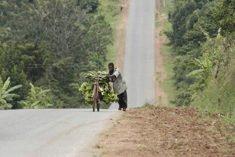 Mid adult man carrying bananas on bicycle at road