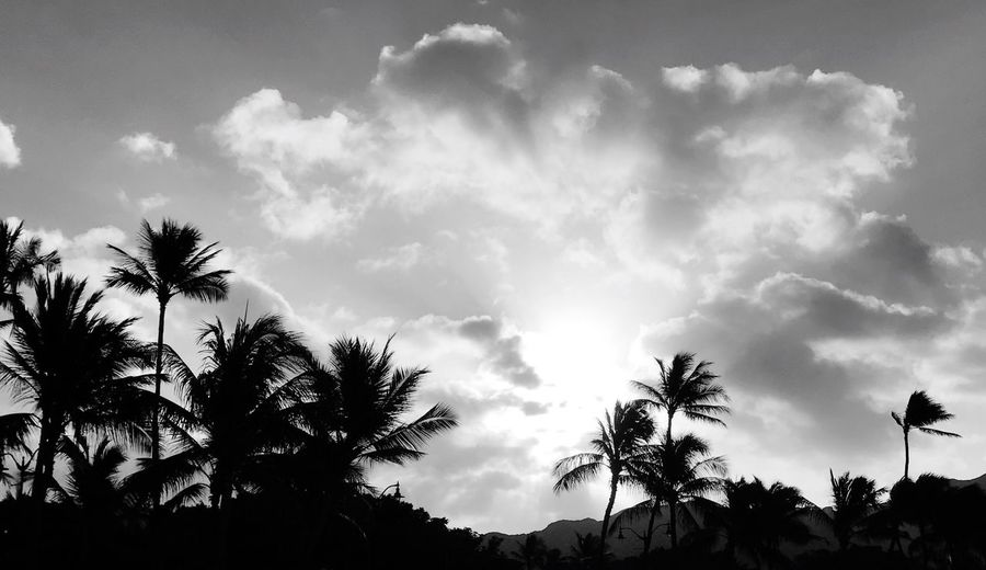 Morning Light Palms Morning Walk Nature Sky Palm Tree Outdoors Vacation Honolulu  Hawaii Blackandwhite