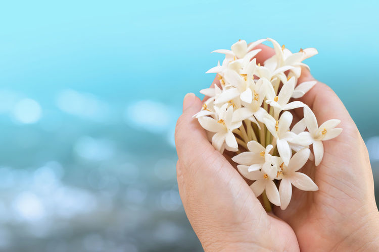 Close-up of cropped hands holding white flowers