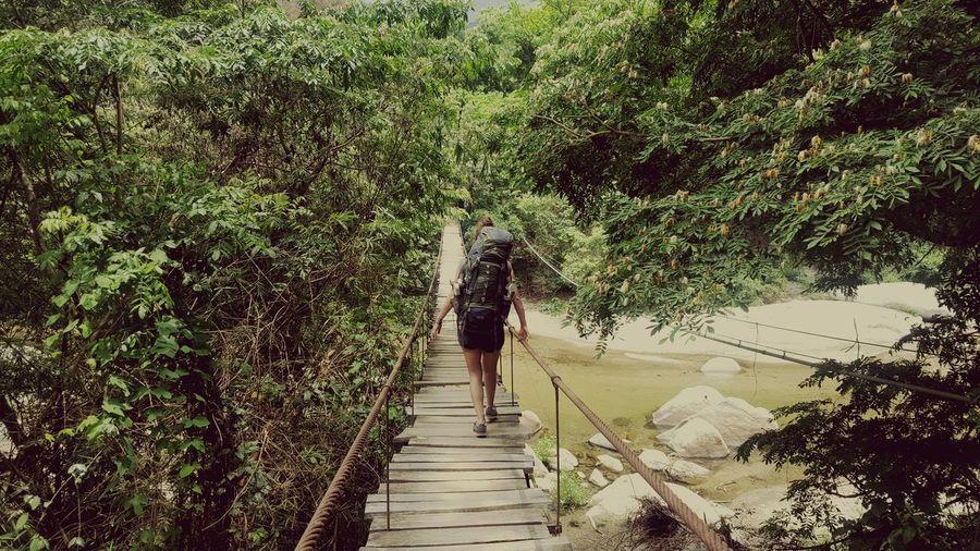 Welcome to the jungle Jungle Columbia Bridge Backpacking Green Tree Walking
