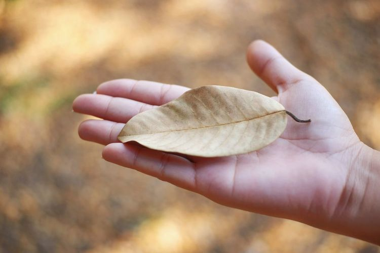 Close-up of human hand holding a leaf