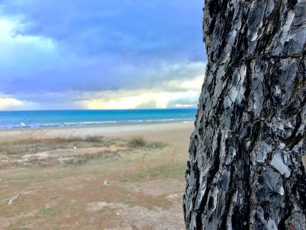 Tree by the sea Nature Landscape Day Outdoors No People Sea Beauty In Nature Cloud - Sky Loutsa Beach Artemida Tree Trees Tree Seawiew Horizon Over Water Weather Environment Shore Cold Days Cold Weather Cold Temperature Cold Morning Cold Winter ❄⛄ Scenics Beach Sky