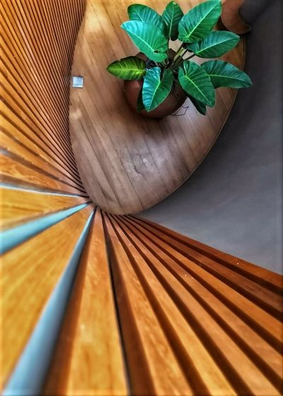 Looking down Looking Down Decoration Dept Of Field Green Color High Angle View Houseplant Indoors  Leaf Leaves Nature No People Pattern Plant Plant Part Potted Plant Still Life View From Top Wall - Building Feature Wall Panels Wood - Material Wooden Flooring Wooden Strips
