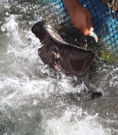 Thanks For The Invite -hash_foo and Damien Crazy Moments In Your Day Feeding Stingray Enjoying Life