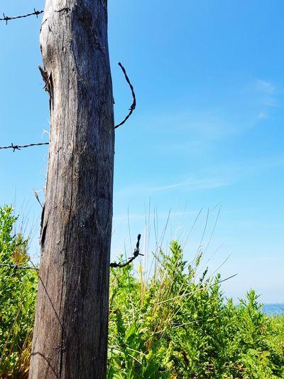 broken wire, open to freedom Wire Barbed Wire Blue Sky Dune Dunes Of Holland Freedom The Netherlands Kijkduin Bunker Bunker Bay #FREIHEITBERLIN Tree Bird Tree Trunk Blue Sky