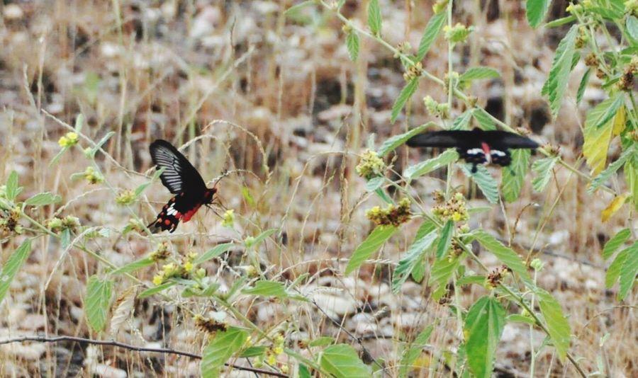 Nature Outdoors Bandhavgarh Bandhavgarh National Park Indian India Forest Travel Destinations Butterfly Butterfly - Insect Butterflies Butterfly Collection