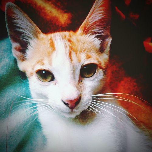 Cat♡ Ilovetheholidays Real Love  Boy