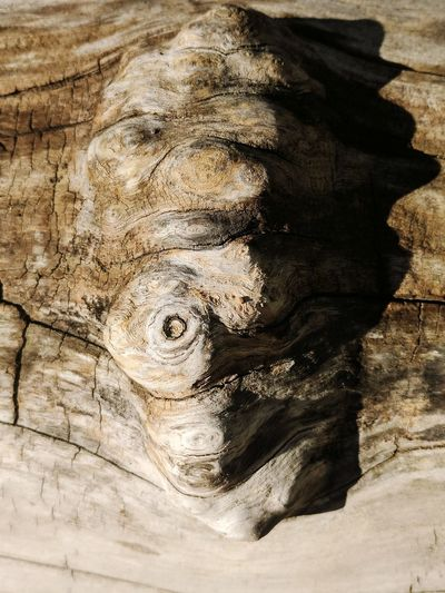 Close-up of animal sculpture on tree trunk