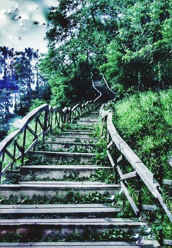 Steps And Staircases Tree Staircase Steps Railing Day Growth Stairs No People Low Angle View Nature Beauty In Nature Sky Live For The Story
