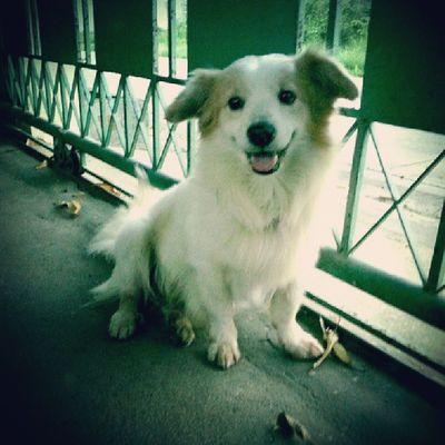 ชีโรยิ้มมมมม Dog Pet13