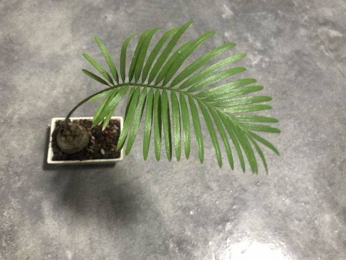 High angle view of potted plant on floor