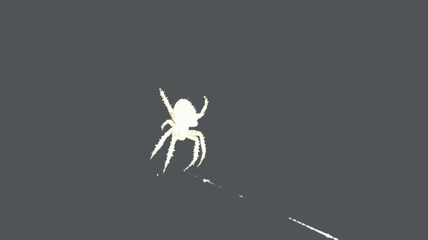 Spider Midnight Shots Taking Photos Check This Out EyeEm Nature Lover