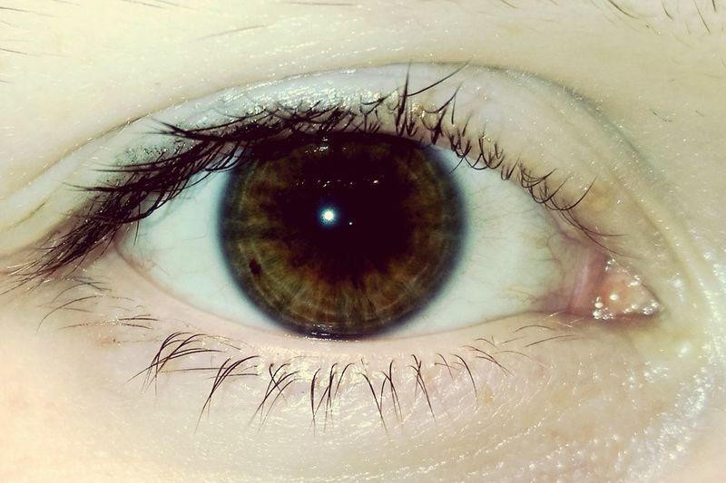 Human Eye Looking At Camera Brown Green Eye Eyepotrait Iris - Eye