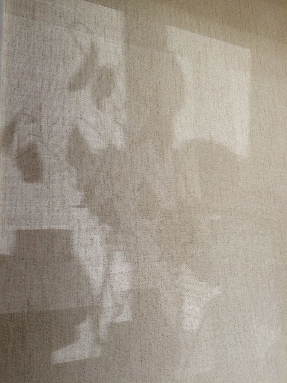 Shadow Of Plants On Curtain At Home
