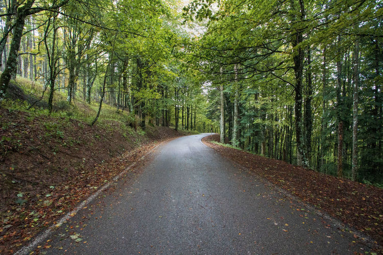 Surface level of road amidst trees in forest