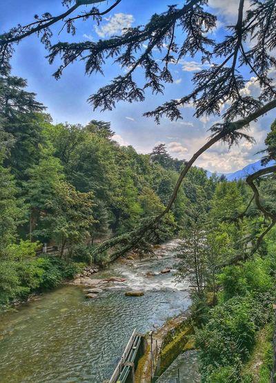 Meran im Sommer ... Naturephotography Nature Natur Landscapephotography Landschaft Licht Light Tree Water Sky Landscape