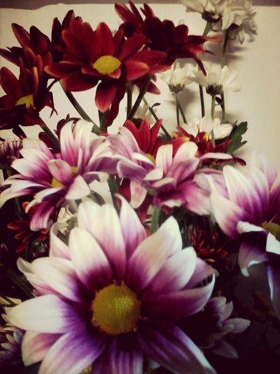 Flower Power =)