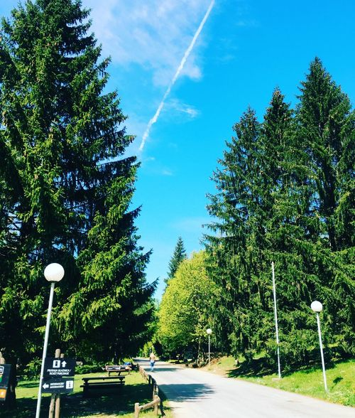 Beauty In Nature Treet Tree Sky Transportation Car Nature Road Day Mode Of Transport Growth Outdoors Green Color No People Scenics Land Vehicle The Way Forward Vapor Trail Contrail My Best Travel Photo