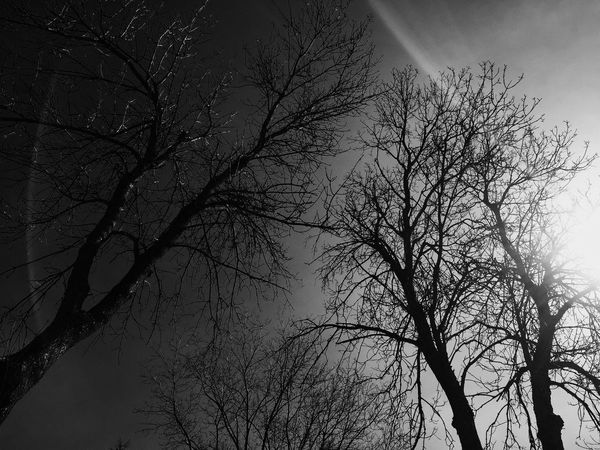 Bare Tree Sky Low Angle View Branch Tree Nature Silhouette Day Outdoors No People Photography Sunlight Blackandwhite Photography Blackandwhite Beauty In Nature