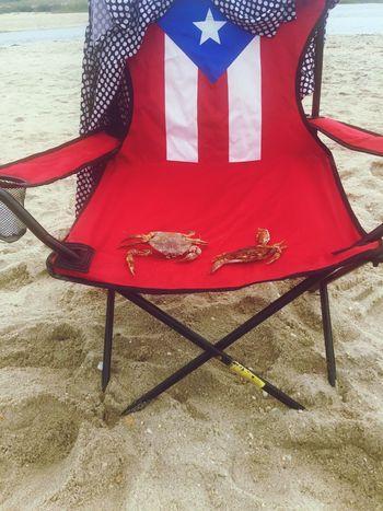 Sebastian & friends Beachdays Jersey Shore