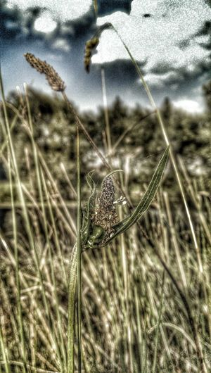 Wild Hearts Can't Be Broken In The Grass Hdr Flowers The Grass Is Green