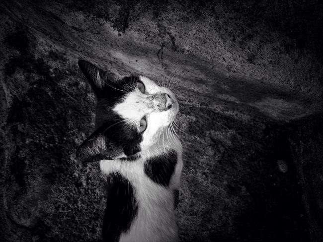 Snap A Cat Bnw_collection EyeEm Best Shots Eyeemvision Cats Animal Themes One Animal Domestic Cat No People Bnw Bnw_captures Bnw_life Bnwphotography Bnw_society Bnw_worldwide Bnw_street Bnw_planet Pet Portraits