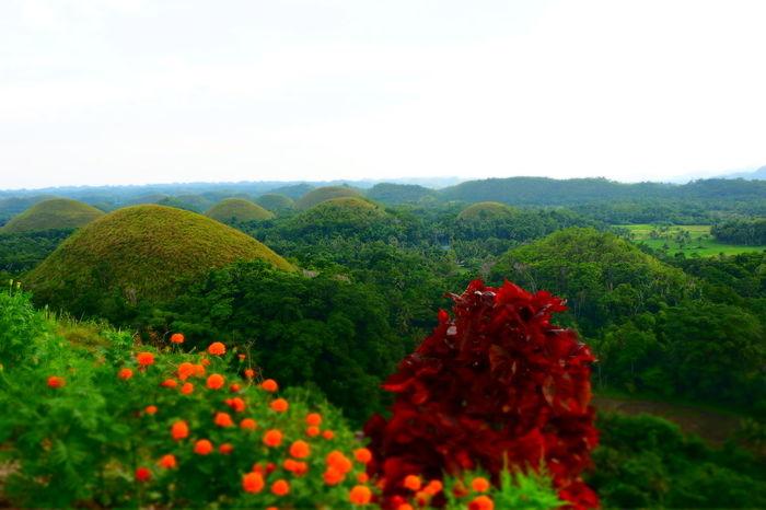 Bohol Philippines Hills Wonders Of Nature Beauty In Nature Chocolatehills Morefuninthephilippines Naturephotography EyeEmNewHere