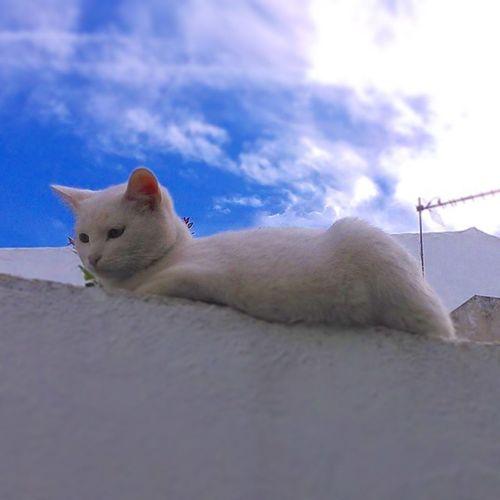 Belleza felina HDR Nofiltros Nophotoshop Movil gatos cute cats