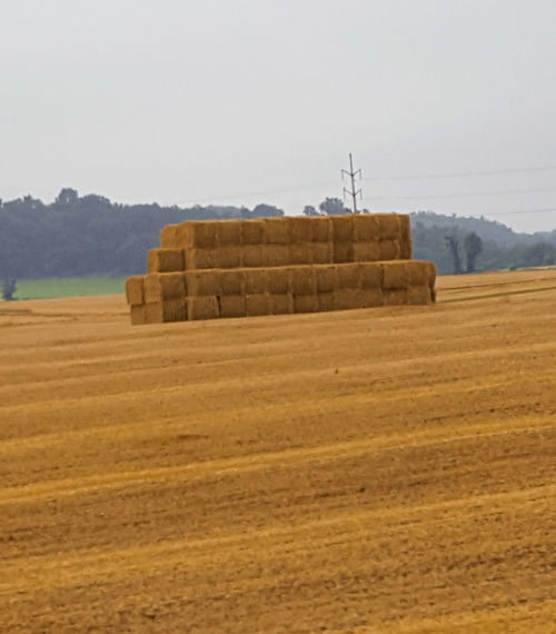 Agriculture Rural Scene Farm Harvesting Bale  Hay Outdoors Business Finance And Industry No People Farmhouse Cereal Plant Day Horizon Nature