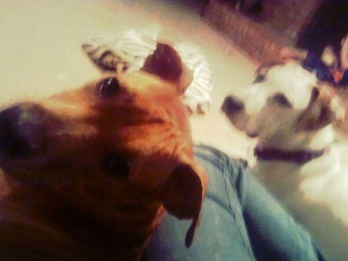 Chloe And Zero <3