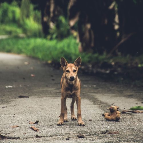 EyeEm Selects Animal Themes One Animal Domestic Animals Looking At Camera Pets Dog Mammal Portrait Outdoors No People Day Nature