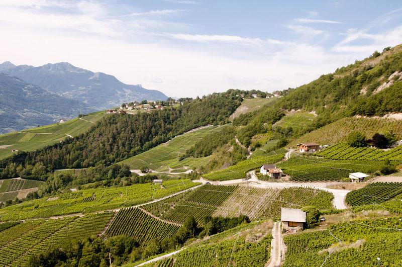 Vineyard Visp Rural Scene Switzerland Vineyard Winery