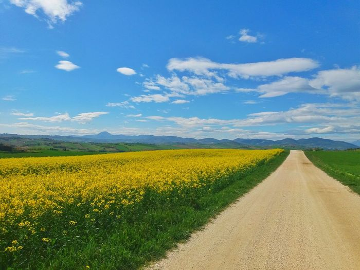 Scenic view of yellow flowering field against sky