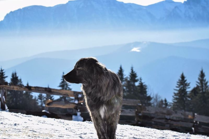 Romania Could  Showcase: February From Romania With Love ❤ Sun Predeal Mauntain Snow Dog Love Fresh Dog Photography