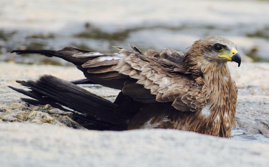 Nature Photography Bird Of Prey