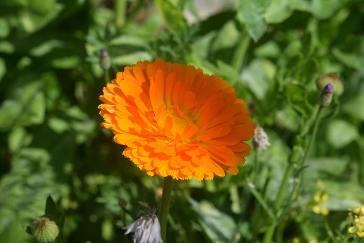 Softness Orange