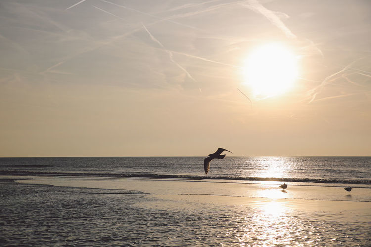 Beach Beauty In Nature Clouds Colors Full Length Golden Hour Horizon Over Water Leisure Activity Lifestyles Men Nature One Person Outdoors Real People Scenics Sea Silhouette Sky Spring Sun Sunlight Sunset Tranquil Scene Vacations Water