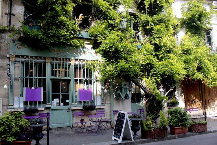 old cafe in Paris, France Plant Tree Architecture Built Structure Building Exterior Building Growth Nature No People Day Seat Outdoors Chair Window Absence House Green Color City Entrance Residential District Colorful Paris Summer Travel Destinations