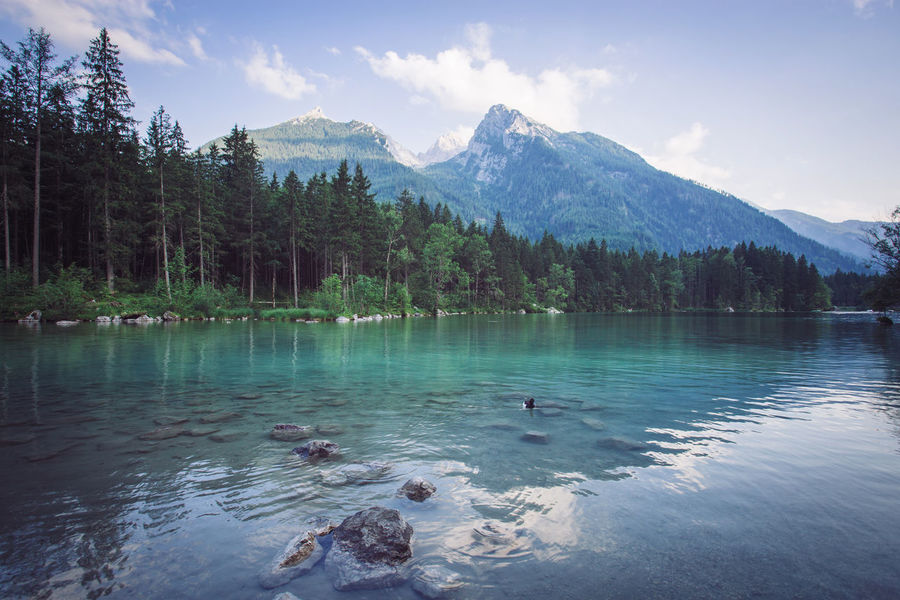 Hintersee und Hochkaltar EyeEm Nature Lover EyeEmNewHere Hintersee Animal Themes Animals In The Wild Beauty In Nature Berchtesgaden Bird Day Lake Mountain Mountain Range Nature No People Outdoors Ramsau  Scenics Sky Swan Swimming Tranquility Tree Water